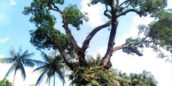 シンガポール植物園(BotanicGarden)